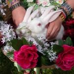 свадьба кроликов, дрессированные кролики видео