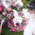Кролики приносят удачу