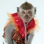 Шоу с обезьянами