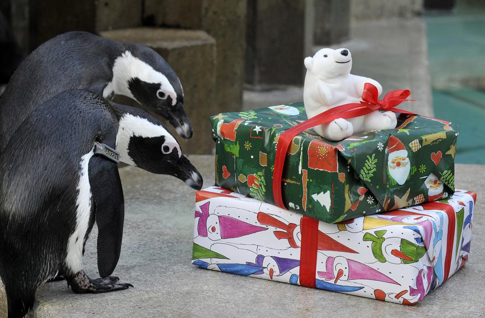 В подарок животное 41