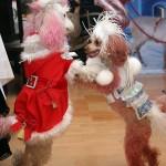 шоу дрессированных собачек, цена, недорого, дешево, фото собачек, видео дрессированных собачек