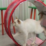 Как дрессировать кошку, как дрессировать домашнюю кошку