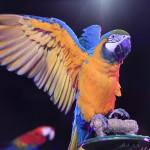 http://zooartist.ru/, дрессированные попугаи на праздник
