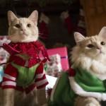 http://zooartist.ru/, кошки, как дрессировать кошку, дрессированные кошки на праздник, дрессированные кошки Москва