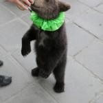Дрессировщики Москва http://zooartist.ru/
