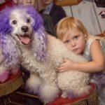 Шоу с собачками на детский праздник