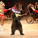 Медведь играет и танцует для Ваших гостей!