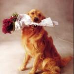 Аренда собак для съемок в Москве