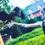 Аренда орла на съемку