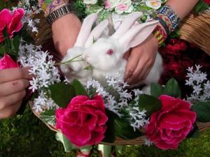 Кролики на свадьбу, дрессированные кролики, заказать на свадьбу