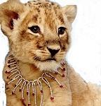 Аренда львенка для фотосессии