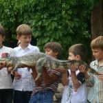 Дрессированные крокодилы на день рожденья, Дрессированные крокодилы на корпаратив, заказать Дрессированных крокодилов