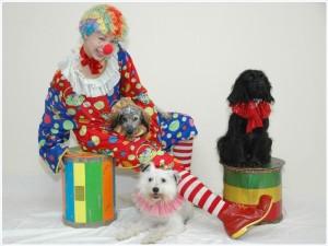 Дрессированные собачки на праздник недорого
