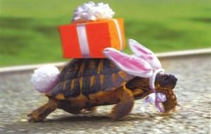 дрессированная черепаха на день рождение, дрессированные черепахи на праздник, черепахи на детский праздник, недорого, дешево, заказать дрессированную черепаху, дрессировщик, дрессировщица Москва