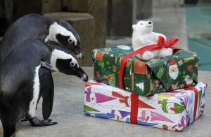 Дрессированные пингвины Москва
