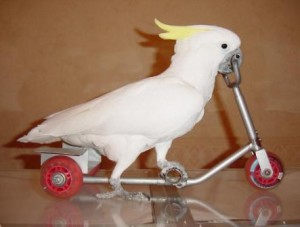 заказать дрессированных попугаев Москва, как дрессировать попугаев