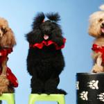 шоу дрессированные собачки