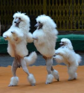 Фото на память, цена дрессированные собачки, видео дрессированные собачки