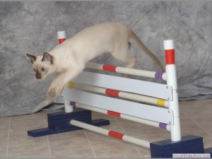 Дрессированные кошки видео