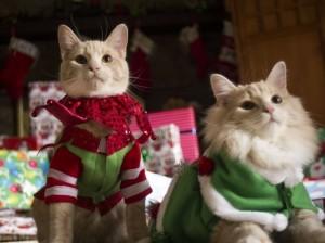 https://zooartist.ru/, кошки, как дрессировать кошку, дрессированные кошки на праздник, дрессированные кошки Москва