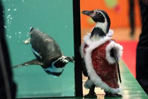 Дрессированные пингвины