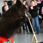 Хороший цирковой медведь приедет к вам домой быстро и не дорого