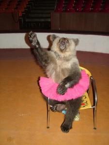 фотография дрессированного медведя