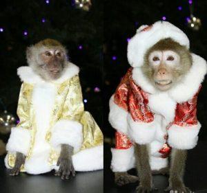 Аренда обезьянки в Москве