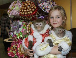Прокат обезьяны на фотосессию