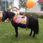 Аренда пони на праздник