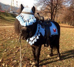 Красивый пони на Ваш праздник