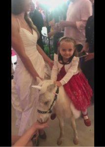 Мини лошадка пони-единорог на детский праздник