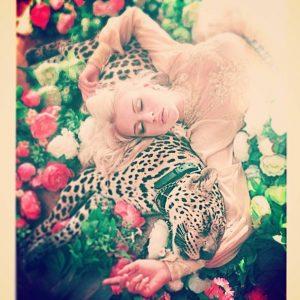 Леопард для фотосессии в аренду
