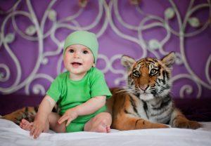 Тигренок на съемках с ребенком