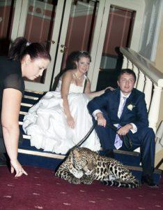 Фотосессия с леопардом на свадьбе