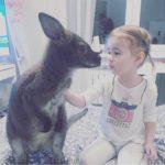Аренда кенгуру на съемок в Москве