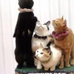 Аренда кошек для фотосессии