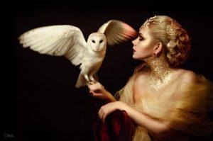 Аренда совы для фотосессии
