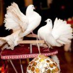Аренда голубей для свадьбы