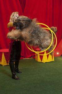 Шоу собак на Новый год