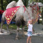 Аренда верблюда на мероприятие