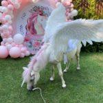 Белый пони Единорог с большими крыльями